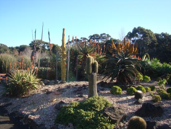 Wollongong Botanic Garden: Cactus Garden