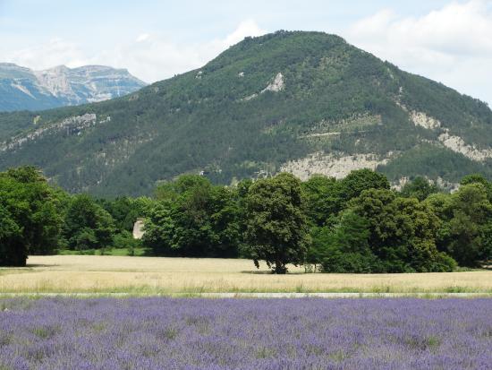 Le Sareymond : Lavendel