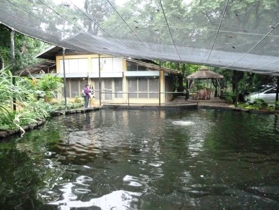 The koi pond is the landscaping center piece picture of for Koi pond quezon city
