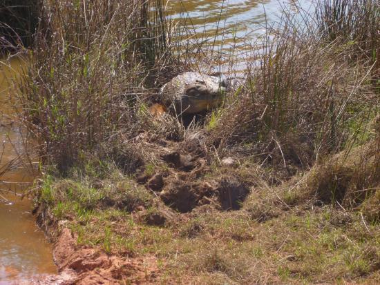Mbabane, Suazilandia: Park