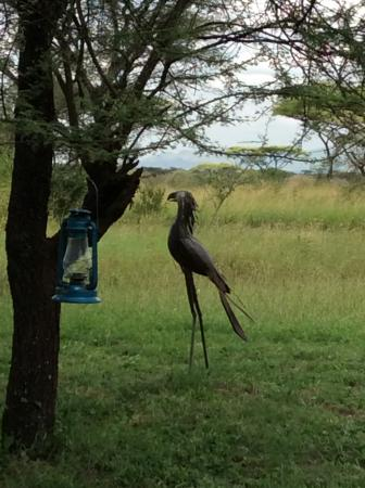 Mapito Tented Camp Serengeti: peaceful garden