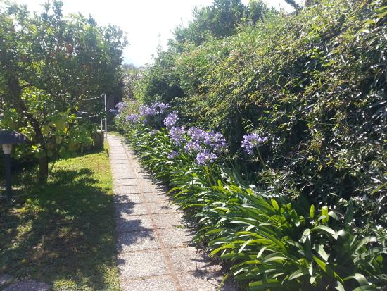 Hotel Girasole: Walk to pool with beautiful Agapanthus