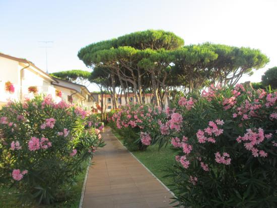 Gallia Hotel: Garten