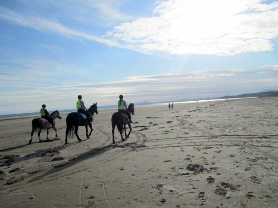 Greenacres Holiday Park - Haven: Horses from the riding school on Black Rock Sands