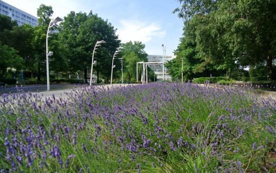 Passerelle pi tonne courbe picture of jardin atlantique for Jardin atlantique
