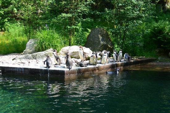 Karta Boras Djurpark.Pingvin Bild Fran Boras Djurpark Boras Tripadvisor