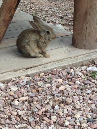 Custer KOA : Bunnies