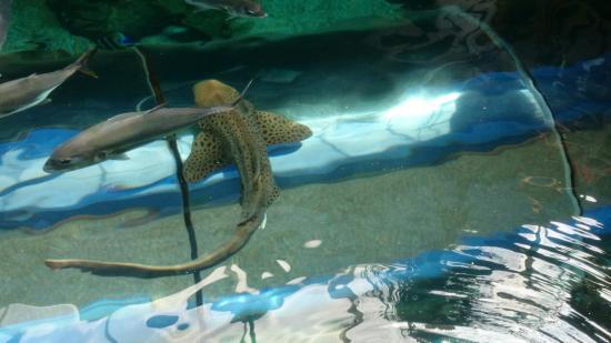 Oceanarium - Picture of Oceanarium, Bournemouth - TripAdvisor