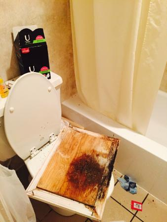 Sarasota Sands : Moldy hatch that fell with roaches