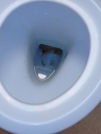 Days Inn Fleet M3: looks like toilet duck wont be making millions in this hotel