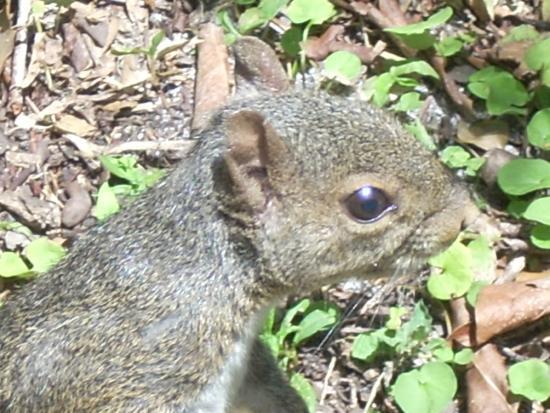 Enchanted Forest Elaine Gordon Park: Grey Squirrel