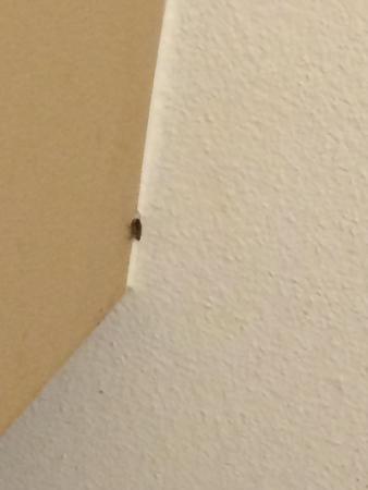 Bugs At Ramada Inn Picture Of Ramada Antioch Antioch