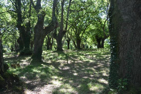 Foto del bosque de carbayos picture of jardin botanico for Jardin del atlantico reviews