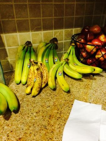 Homewood Suites by Hilton Sarasota: Morning breakfast... Choice of camoflouged overripe bananas or inedible green bananas