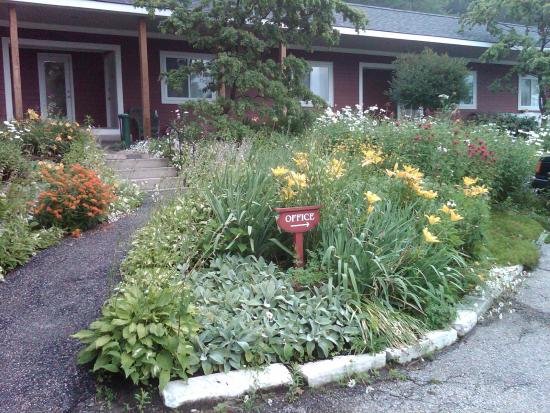 The Stamford Motel & Restaurant: The Stamford's ever lovely perennial flowers greet you