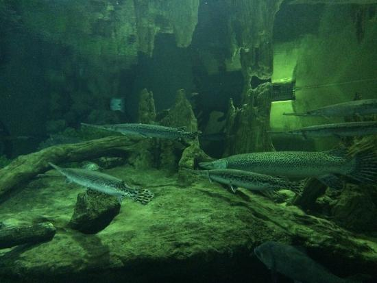 One of the salt water tanks - Picture of National ...