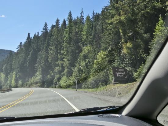 Mount Hood National Forest: entering MHNF