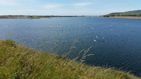 RSPB Hodbarrow Nature Reserve