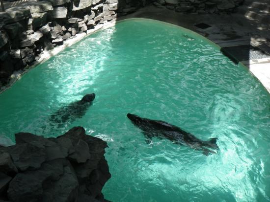 Reef Display Picture Of Aquarium Of Niagara Niagara