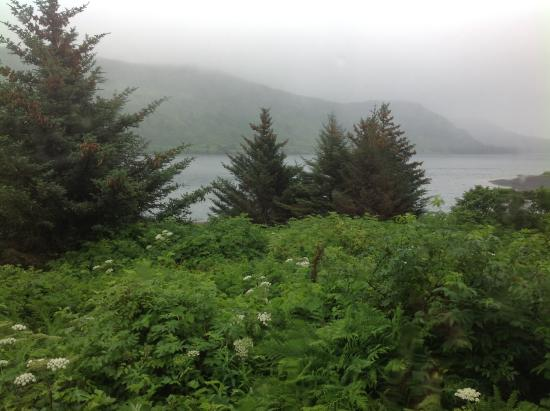 Kodiak Raspberry Island Remote Lodge: View from our cabin window