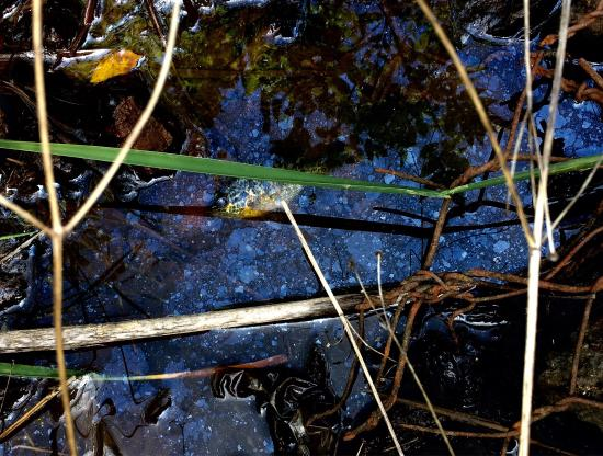 Lake Aquitaine Park: Nice trail. We found a fish struggling to stay alive with most of the water having dried up in a