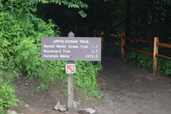 Newfound Gap Road: Appalachian Trail
