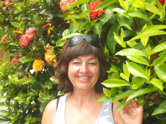 Panchi Villa: Цветы в декабре:)