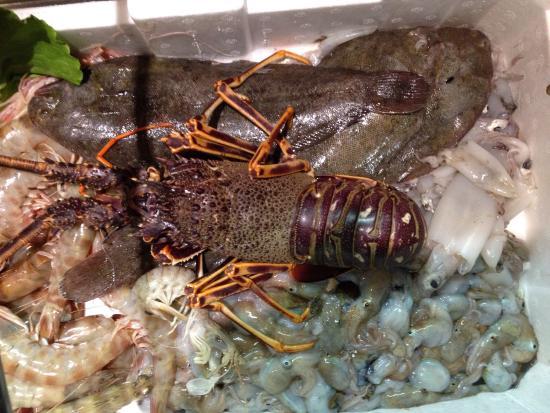 Set Bagno Rana : Rombo chiodato aragoste rana pescatrice moscardini bild von