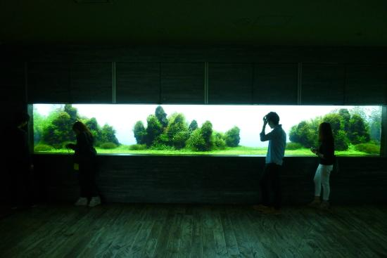 Sumida Aquarium: Aquascaping Tank