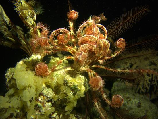 Extra Divers Dahab