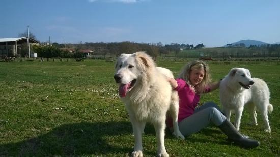 Agriturismo I Due Mondi: i nostri cani