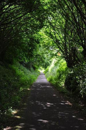 Tarka Trail (Braunton to Meeth) 사진