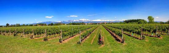 Cantine Gava: Una veduta di alcune delle nostre vigne