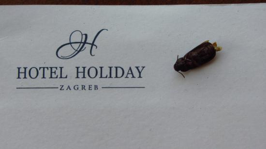 Hotel Holiday: vecina con quien compartimos habitacion