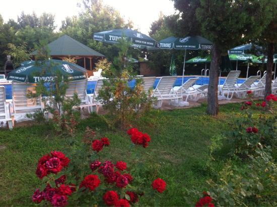 Bechet, رومانيا: Hôtel et piscine