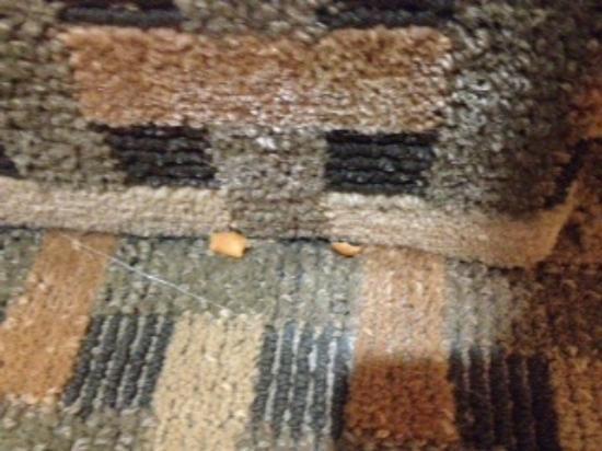 Quality Inn & Suites Decatur - Atlanta East: Food left on floor