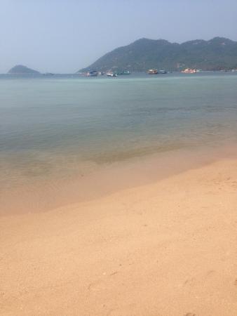 Sensi Paradise Photo