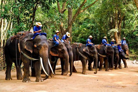 Resultado de imagen para elefante excursion