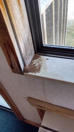 Waterfront Inn - Mackinaw City : Bugs?