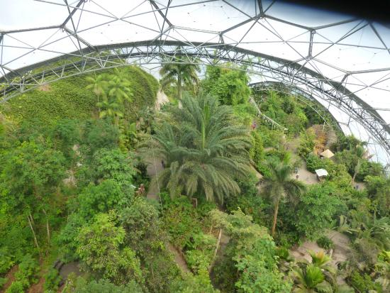 Eden Project Rainforest canopy from above & Rainforest canopy from above - Picture of Eden Project Bodelva ...