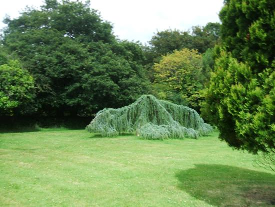 Spreading cyprus in the pinetum - Picture of Pinetum Gardens, St ...