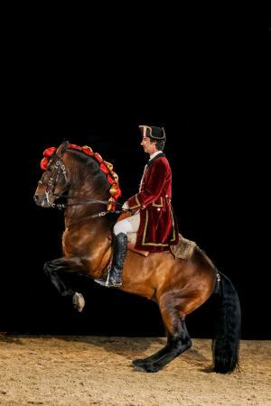 A Escola Portuguesa de Arte Equestre