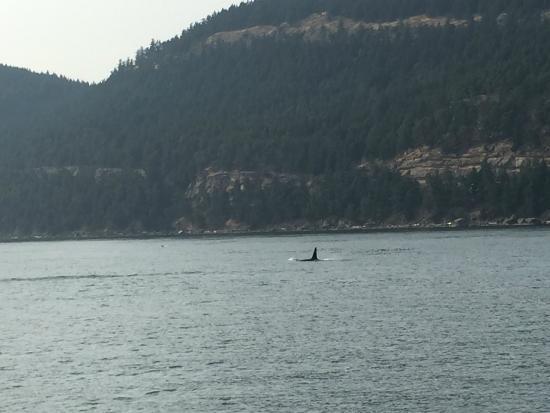 Plenty of whales dating