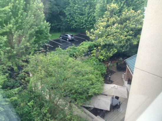 Clackamas, Όρεγκον: Lush greenery outside my room