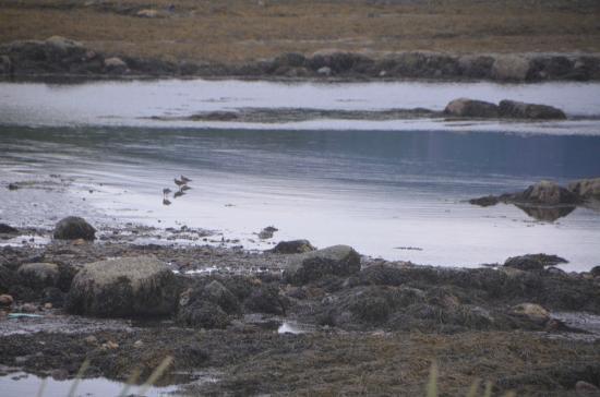 Ocean Acre Inn: shoreline at Rocky Harbour