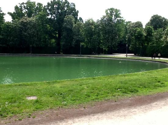Papera nel lago foto di parco ducale parma tripadvisor for Laghetto per papere