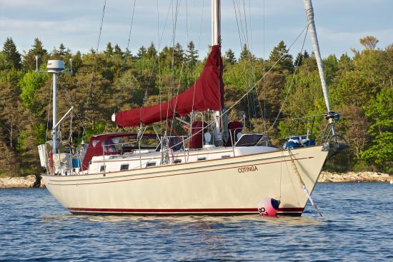 Sail Cotinga