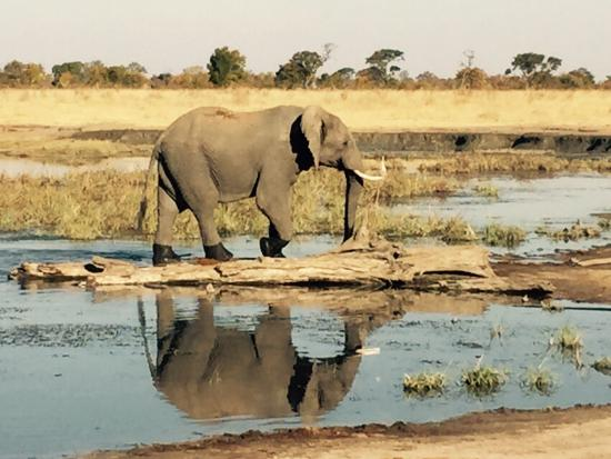 Wilderness Safaris Davison's Camp: A few pics from our recent trip to Hwange...