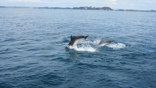 Explore - Dolphin Encounter : A pic of Dolphin from Cruise