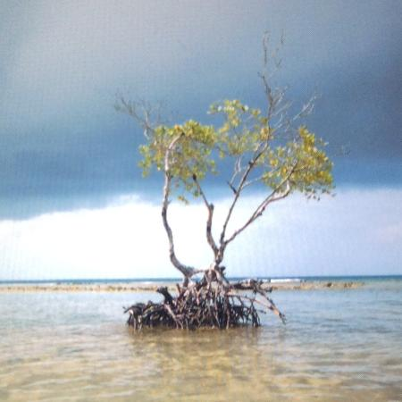 Roatan Pirates Bay: Very shallow water...until it isn't.